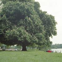 イギリス,ロンドンのリッチモンドパークの木の下で昼寝をする人がいる景色