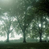 イギリス,ロンドンのリージェントパークの大きな木々