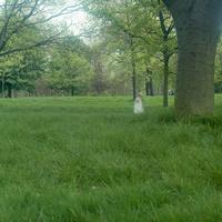 イギリス,ロンドンのリージェントパークでたたずむ女の子