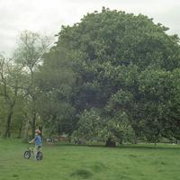 イギリス,ロンドンのリージェントパークの自転車と子供