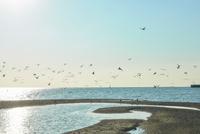 12月海鳥風青い空