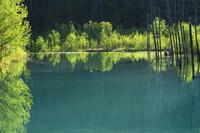 新緑の青い池 10770000352| 写真素材・ストックフォト・画像・イラスト素材|アマナイメージズ