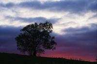 おばけの木と夕焼け 10770000359| 写真素材・ストックフォト・画像・イラスト素材|アマナイメージズ