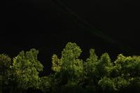 新緑と光 10770000362| 写真素材・ストックフォト・画像・イラスト素材|アマナイメージズ