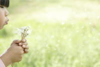 タンポポの綿毛を飛ばす女の子(右向き・顔の一部と手)