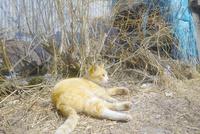 寝ころぶ野良猫