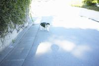 対峙する野良猫