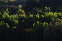 新緑 10770000451| 写真素材・ストックフォト・画像・イラスト素材|アマナイメージズ