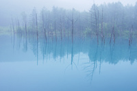 霧雨の青い池 10770000456| 写真素材・ストックフォト・画像・イラスト素材|アマナイメージズ