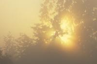 濃い霧の光芒 10770000457| 写真素材・ストックフォト・画像・イラスト素材|アマナイメージズ
