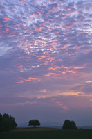 平行四辺形の木と朝焼け 10770000458| 写真素材・ストックフォト・画像・イラスト素材|アマナイメージズ
