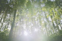 森林に注ぐ光