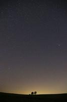 親子の木と星空 10770000521| 写真素材・ストックフォト・画像・イラスト素材|アマナイメージズ