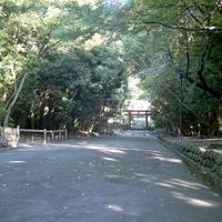 鎌倉鶴岡八幡宮内