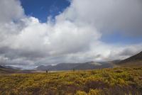 トゥームストーン準州立公園の虹