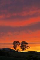 パフィーの木と夕焼け 10770000550| 写真素材・ストックフォト・画像・イラスト素材|アマナイメージズ