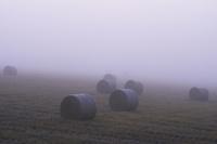 濃い霧とロール 10770000551| 写真素材・ストックフォト・画像・イラスト素材|アマナイメージズ