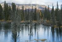 トゥームストーン準州立公園にある池 10770000622| 写真素材・ストックフォト・画像・イラスト素材|アマナイメージズ