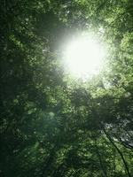 新緑の緑と木漏れ日