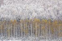 雪と紅葉 10770000638| 写真素材・ストックフォト・画像・イラスト素材|アマナイメージズ