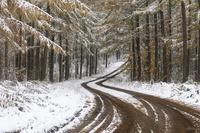 雪とカラマツの紅葉 10770000639| 写真素材・ストックフォト・画像・イラスト素材|アマナイメージズ