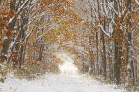 雪の林道 10770000640| 写真素材・ストックフォト・画像・イラスト素材|アマナイメージズ