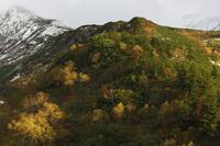 十勝岳の紅葉 10770000642| 写真素材・ストックフォト・画像・イラスト素材|アマナイメージズ