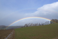 秋蒔き小麦の丘と虹