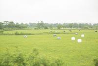 車窓から見る牧草風景
