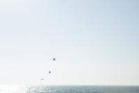 海の上を飛ぶ鳥