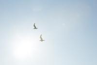 飛ぶ鳥 10770000653| 写真素材・ストックフォト・画像・イラスト素材|アマナイメージズ