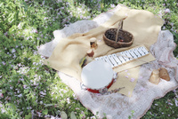 桜散る草原に置かれたおもちゃの楽器たち