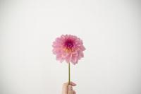 花を持つ人 10770000673| 写真素材・ストックフォト・画像・イラスト素材|アマナイメージズ