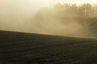 朝霧と秋蒔き小麦の丘 10770000684| 写真素材・ストックフォト・画像・イラスト素材|アマナイメージズ