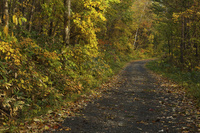秋の林道 10770000686| 写真素材・ストックフォト・画像・イラスト素材|アマナイメージズ