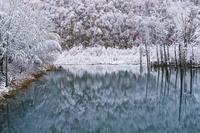 初雪の青い池 10770000687| 写真素材・ストックフォト・画像・イラスト素材|アマナイメージズ