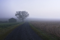 霧と砂利道 10770000689| 写真素材・ストックフォト・画像・イラスト素材|アマナイメージズ