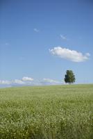 草原の中に立つ木