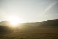 朝焼けの麦畑