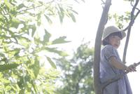 木登りをするワンピース姿の女の子