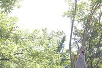 木登りをするワンピース姿の女の子の後ろ姿