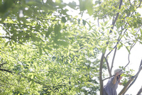 木登りをするワンピース姿の女の子の横姿