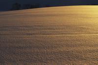 金色に光る丘