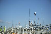漁船とカモメ