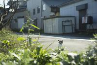 草むらから覗く猫