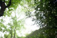 ニューヨークのセントラルパークの木々と空と光