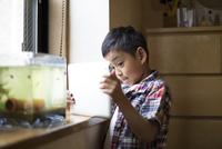 タブレットで水槽の写真を撮る小学生の男の子