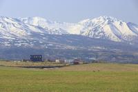 白金模範牧場の春
