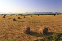 麦わらロール転がる美瑛の丘