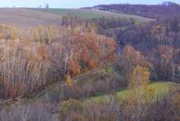 紅葉の丘の中に続く道